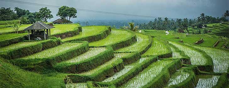 Top-Things-to-Do-36-Hours-in-Yogyakarta-27